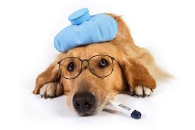 Canine Cough: Get to know the facts 1