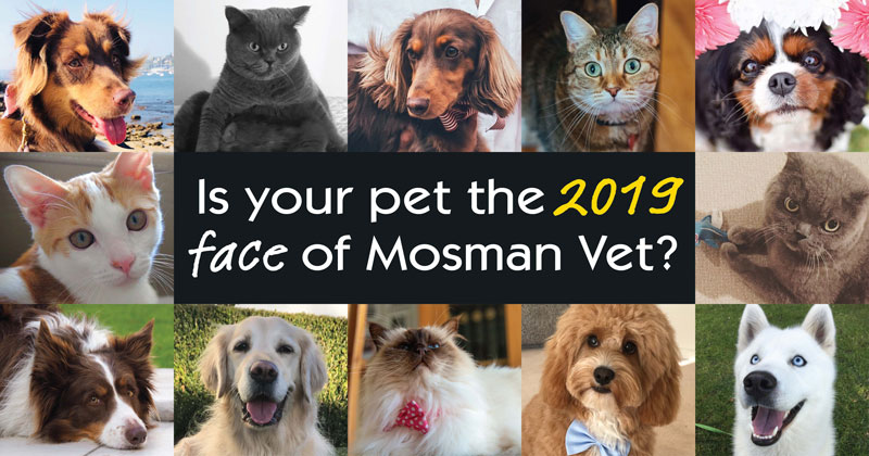 The Face of Mosman Vet 1