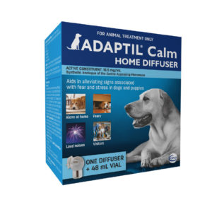 Nine Steps to Calm Your Dog in Thunder/Fireworks 4