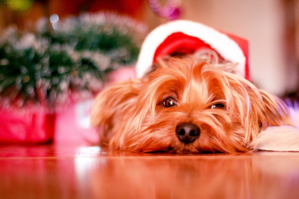 Keep the Season Fun but Not too Festive for Your Furry Friends 1