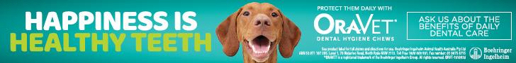 Dental Months at Mosman Vet 3