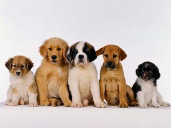 Pet Care 13