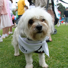Mosman Pet's Day Out 6