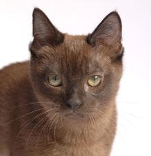 Kitten Care 1