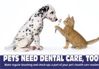When's the last time your pet went to the dentist? 1