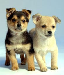 Pet Care 1