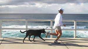 The rules for running with dogs 1